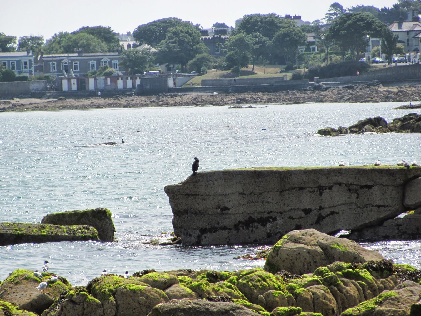 A seabird rests on a rock wall on the shoreline in Dun Laoghaire, Co. Dublin, Ireland
