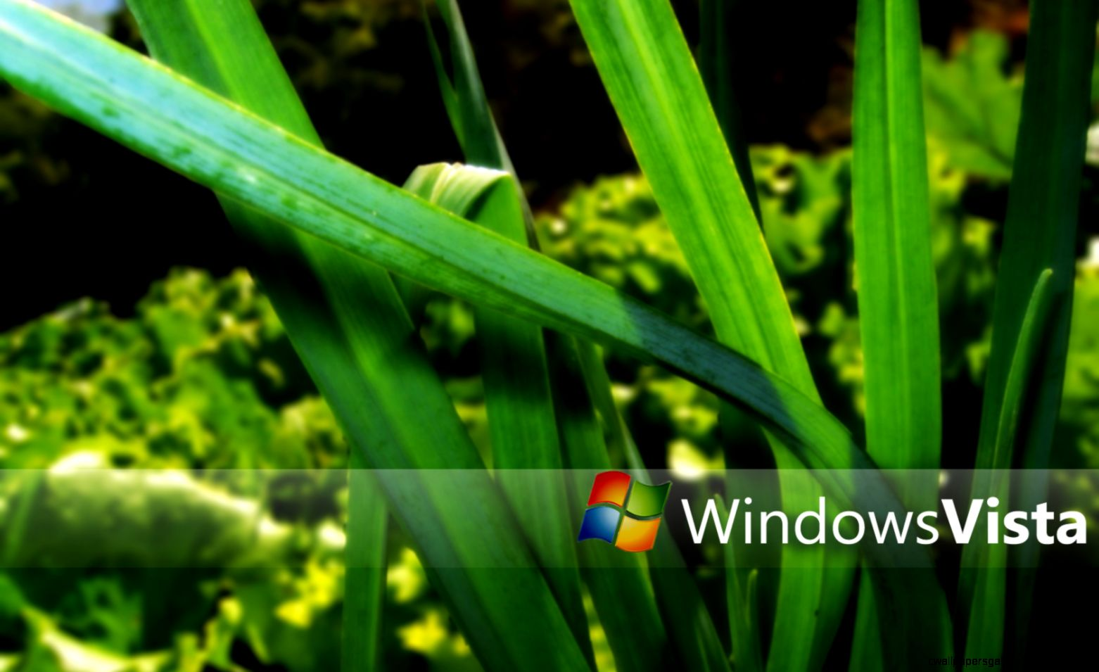 Windows Vista Nature Wallpaper By Valorieketlyn 1680x1050 pixel