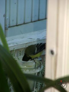 fågel som äter ljus