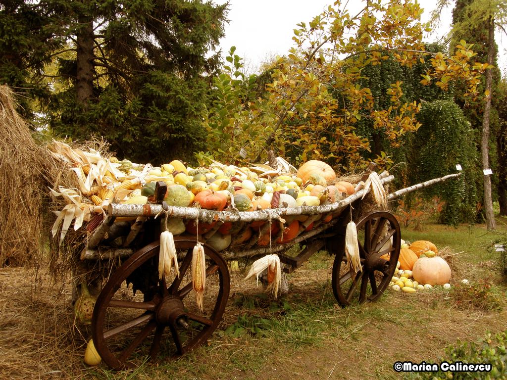 Fall Desktop Backgrounds Autumn Harvest