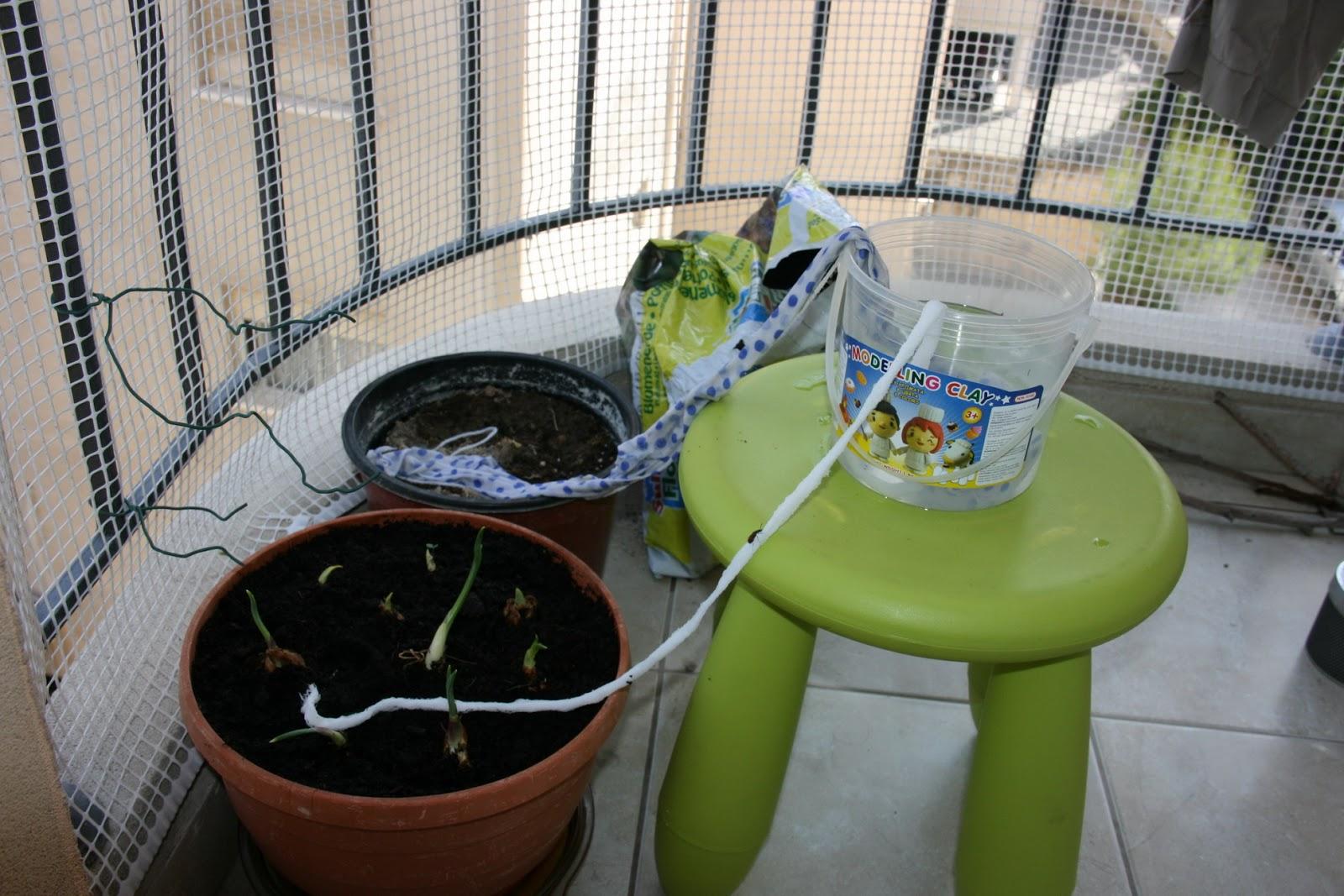 Как сделать капельный полив горшок для цветы