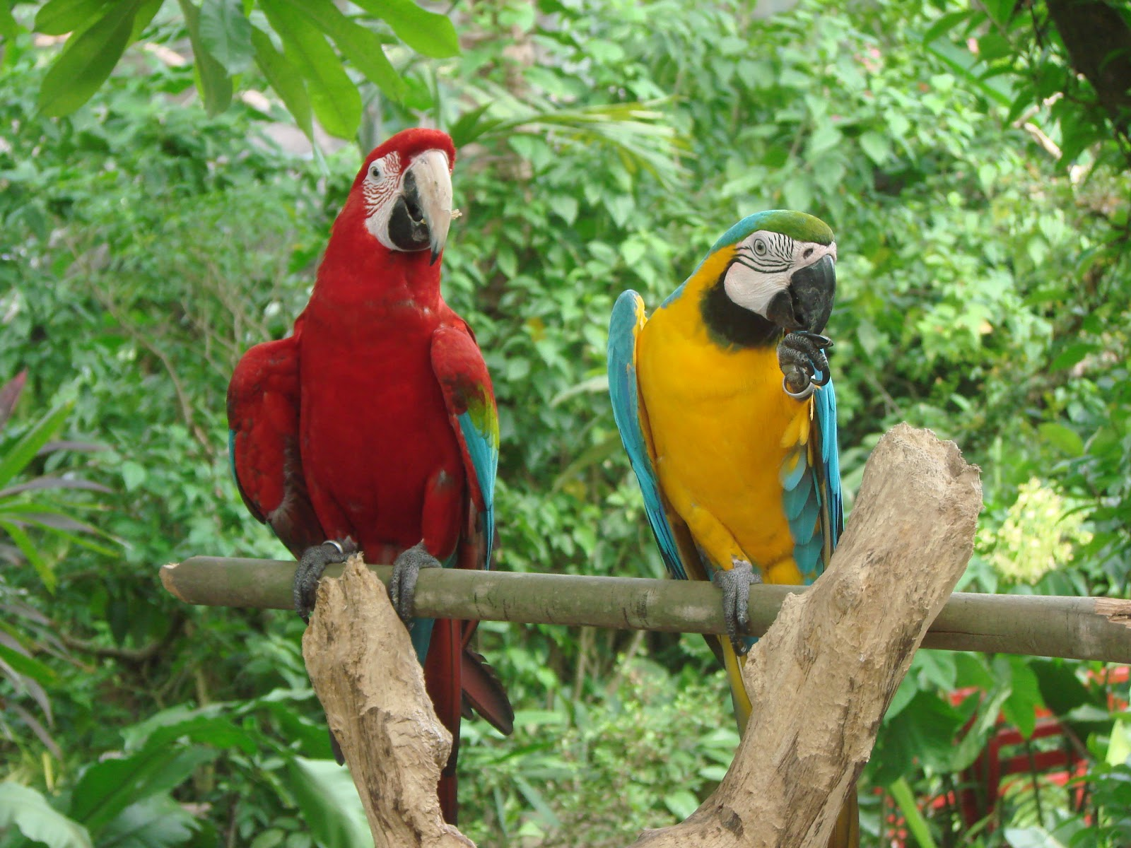 best pets blog parrots as pets   macaws