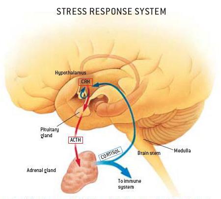 steroid immune response