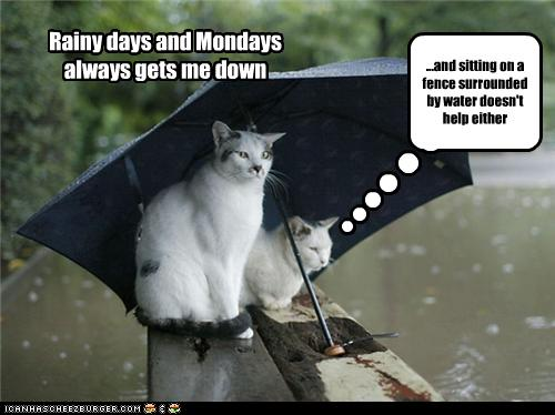 Funny Rainy Day Meme : Karen s classic rock rainy days and mondays
