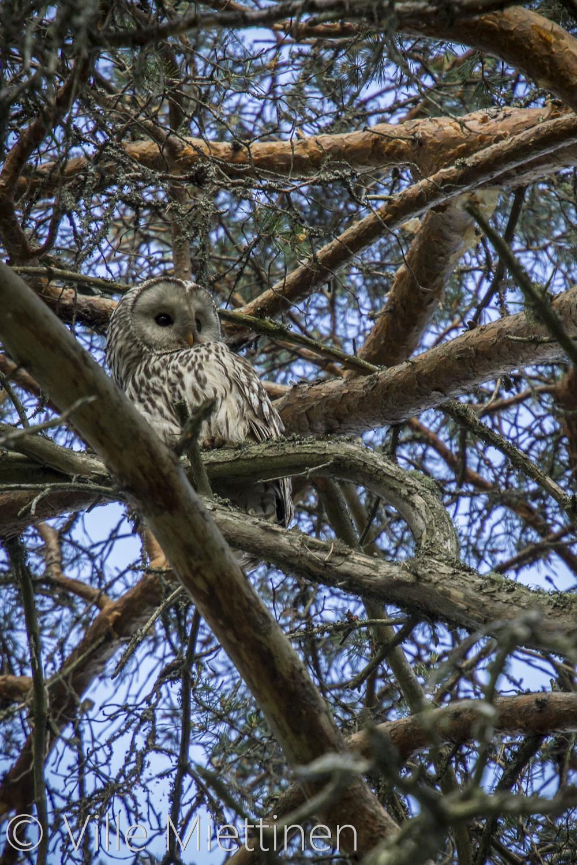 IMAGE: http://3.bp.blogspot.com/-pGkv4WlXmU8/UcKu1ef7RhI/AAAAAAAAAW8/5lSFvUI0ECA/s1600/viirupollo2-vmphotography.jpg