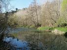 Atapeït bosc de ribera als marges del Llobregat