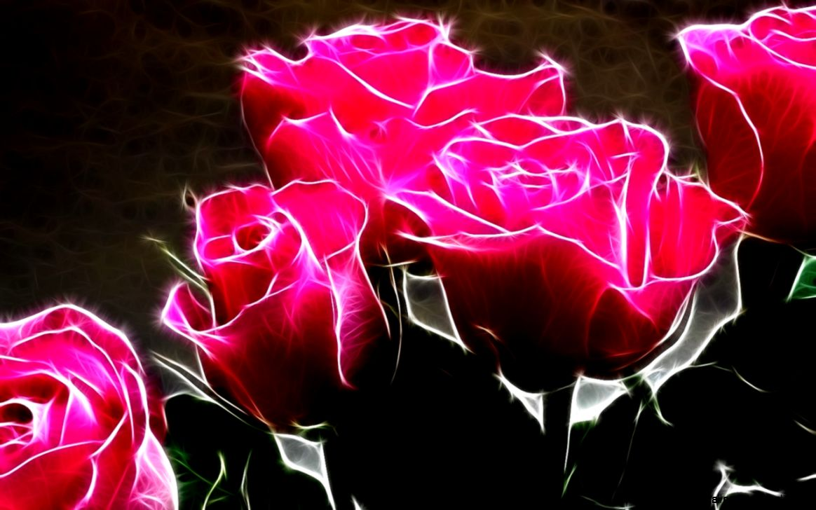 Hot Pink Rose Wallpapers