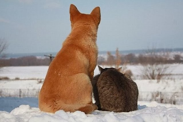 Adevarata prietenie