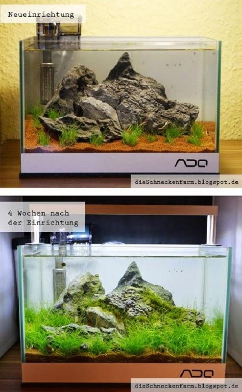 Nano Aquarium Einrichtung 12 Liter – Step by Step