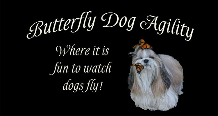 Butterfly Dog: Agility!