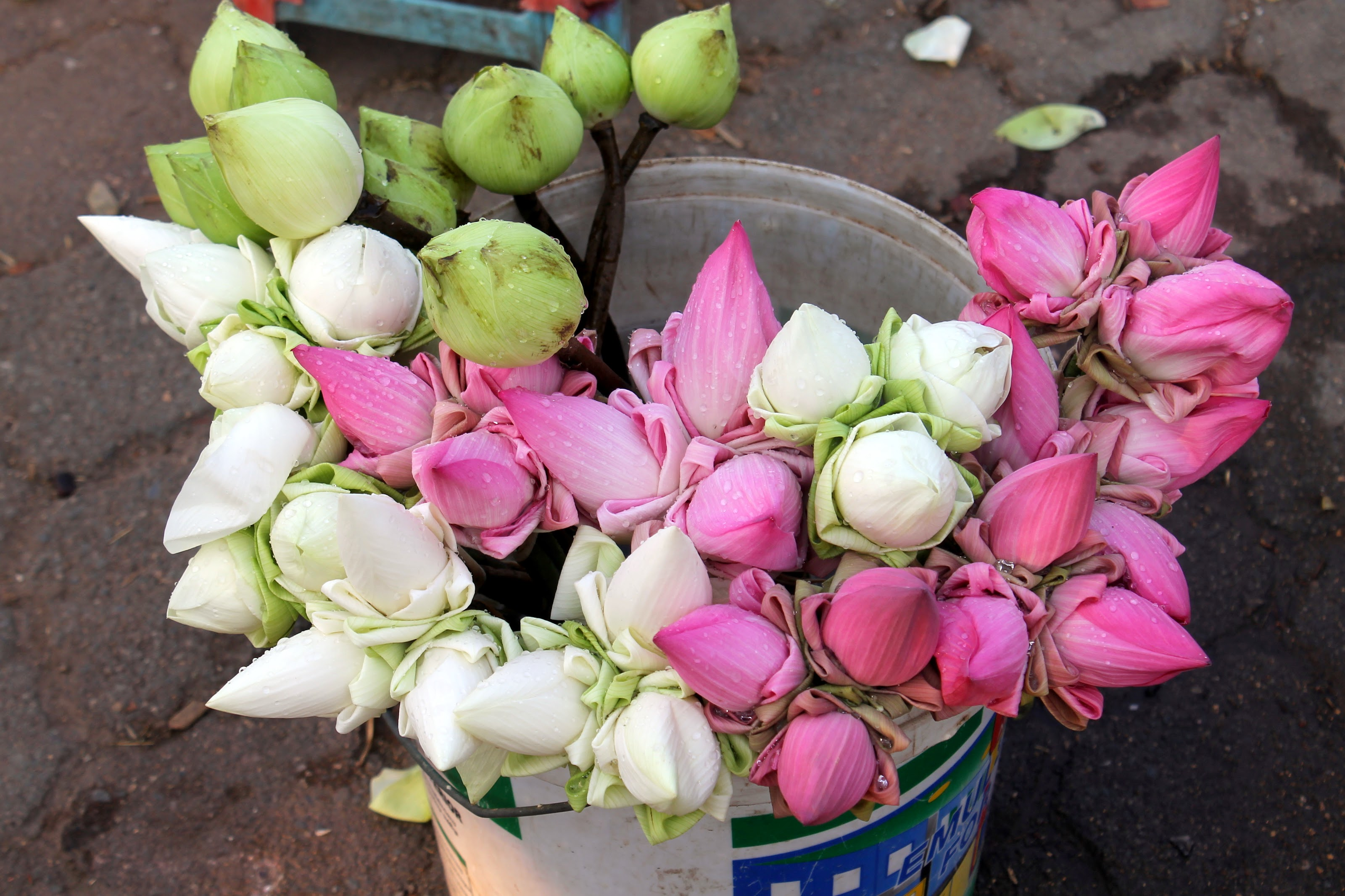 Lincoln goes to indonesia and thailand and phnom penh royal palace after our tour of the palace grounds we headed out for a walk around the area towards the river these beautiful lotus flowers were for sale for offerings izmirmasajfo