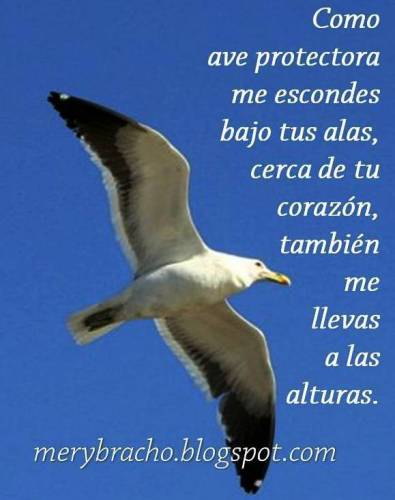 Vivo seguro contigo, mi Dios. El Señor me protege. Dios me cuida. Tú me animas a volar. Vuelo contigo. Disfruto las alturas. Poema cristiano motivador, oración en poema. Seguridad en Dios. Protección para tu vida. Postal cristiana de aliento.