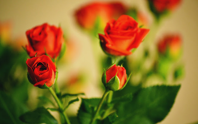 Retro Style Photo A Boquet of Red Roses HD Wallpaper