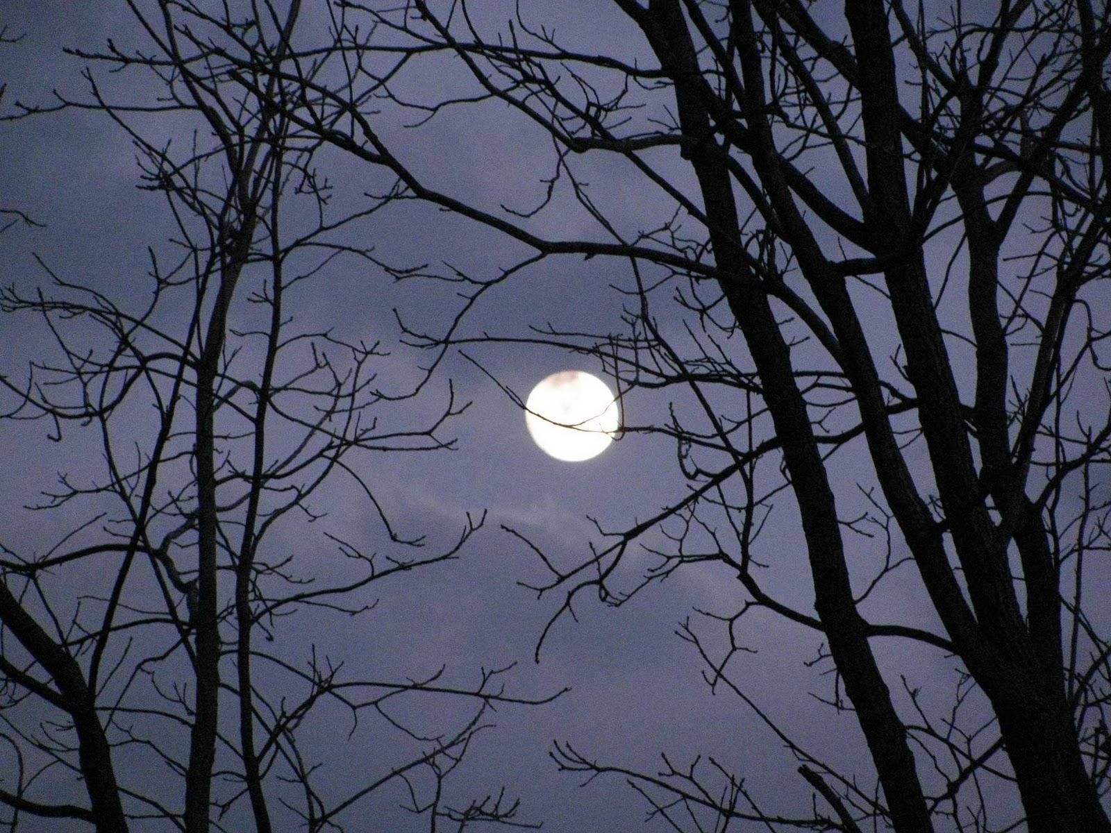 http://3.bp.blogspot.com/-pICEYNNzN9M/TVyZfxGehnI/AAAAAAAAEZM/Hep3PdUzwpk/s1600/February-Full-Moon.jpg