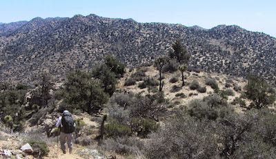 View southeast from the eastern ridge of Warren Point toward Panorama Loop Trail and highpoint 5191', Black Rock Canyon, Joshua Tree National Park