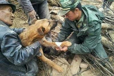 cachorro resgatado em terremoto na china
