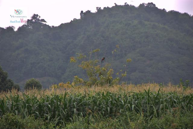 Khám phá tour đường sông từ rừng Nam Cát Tiên đến Làng Tà Lài