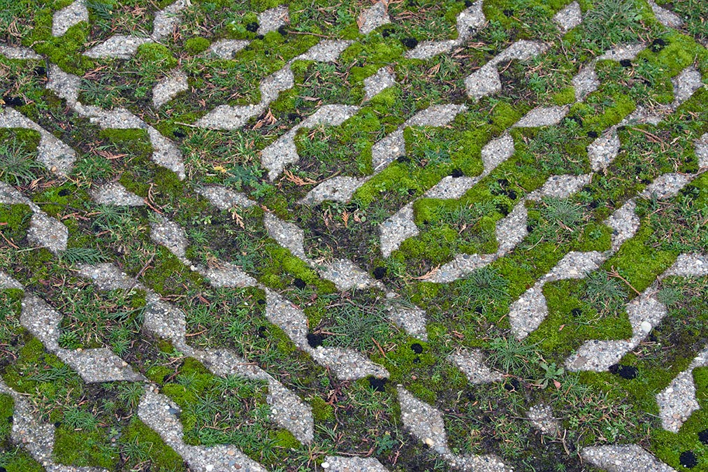 patterned moss with deer droppings