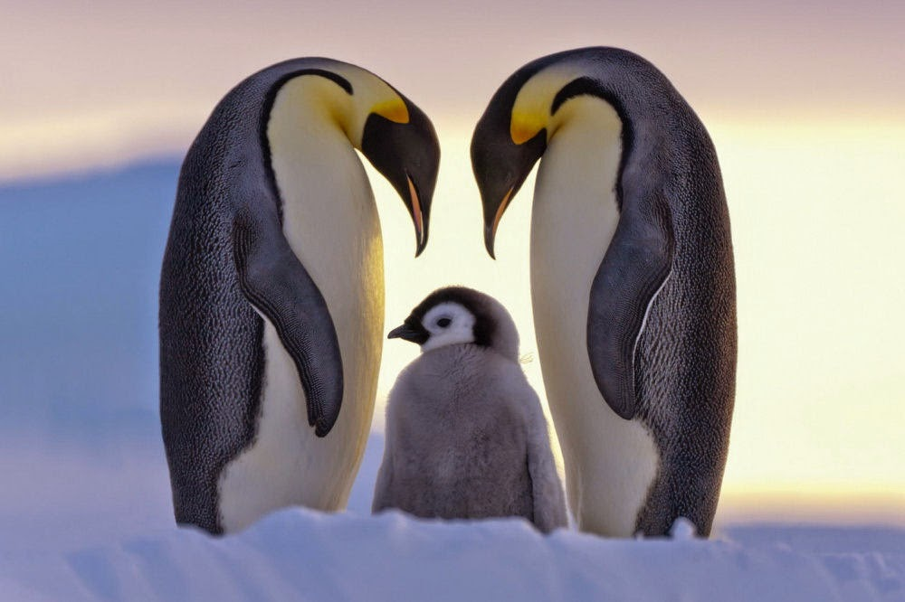 http://funkidos.com/pictures-world/wild-life/gentle-and-funny-pictures-of-penguins
