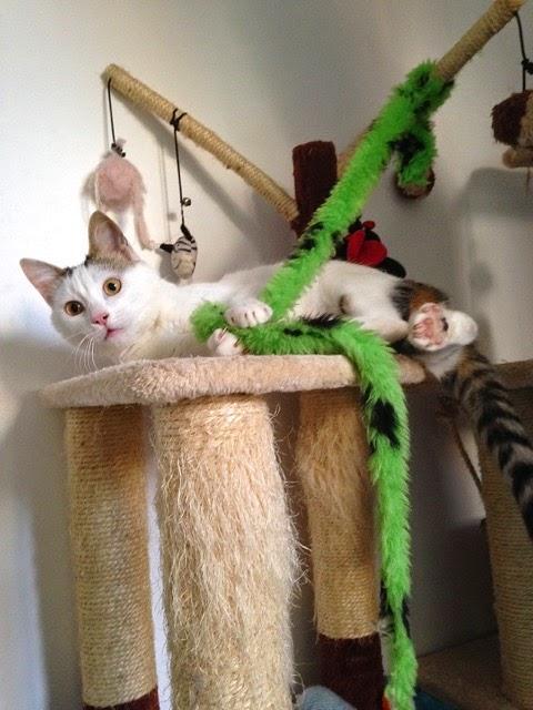 Woodland Nook Cat Rescue