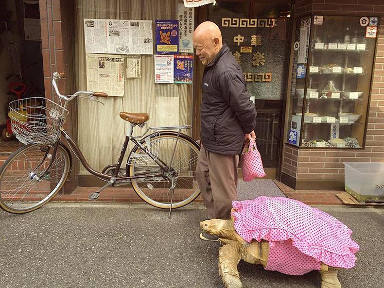 Hombre pasea a su tortuga mascota por las calles de Tokio