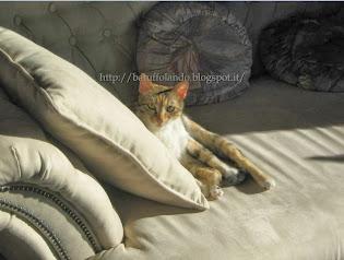 Lena la cat-model