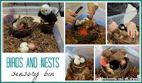 birds and nests sensory bin