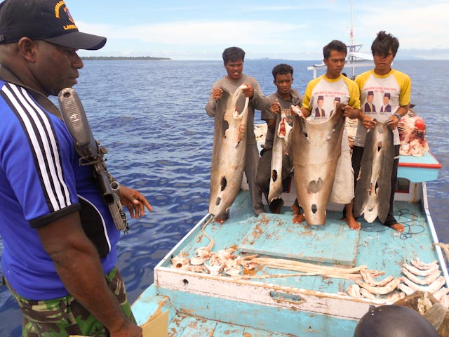 CII  Sesalkan Lolosnya 33 Nelayan Penangkap Hiu