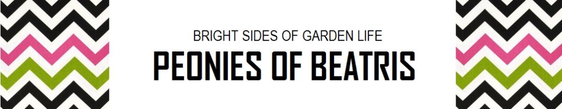 Peonies of Beatris