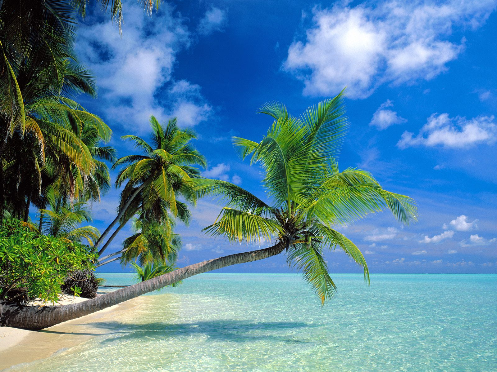 Amazing Beaches Wallpapers 1600x1200 Hd Wallpapers HD