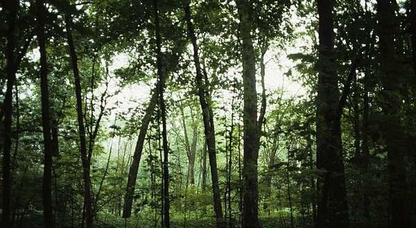 El bosque de hoja perenne naturaleza for Nombres de los arboles de hoja perenne