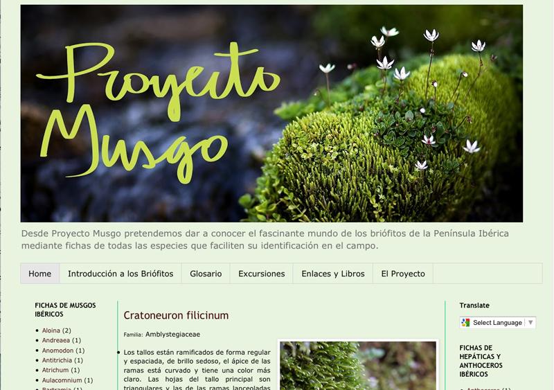 Briologa Un buen sitio web para los musgos de Espaa