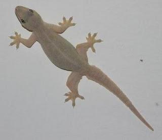 http://www.bobyblog/2013/03/keberadaan-hewan-sebagai-tanda.html