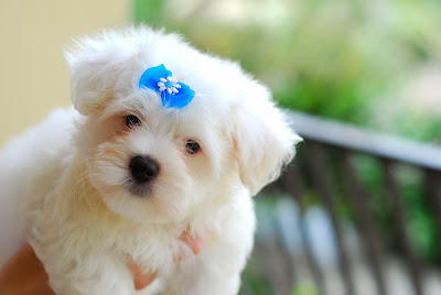 Beautiful Dogs wallpapers