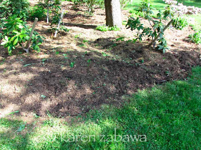 Garden bed after weeding, so rhododendrons now able to grow.