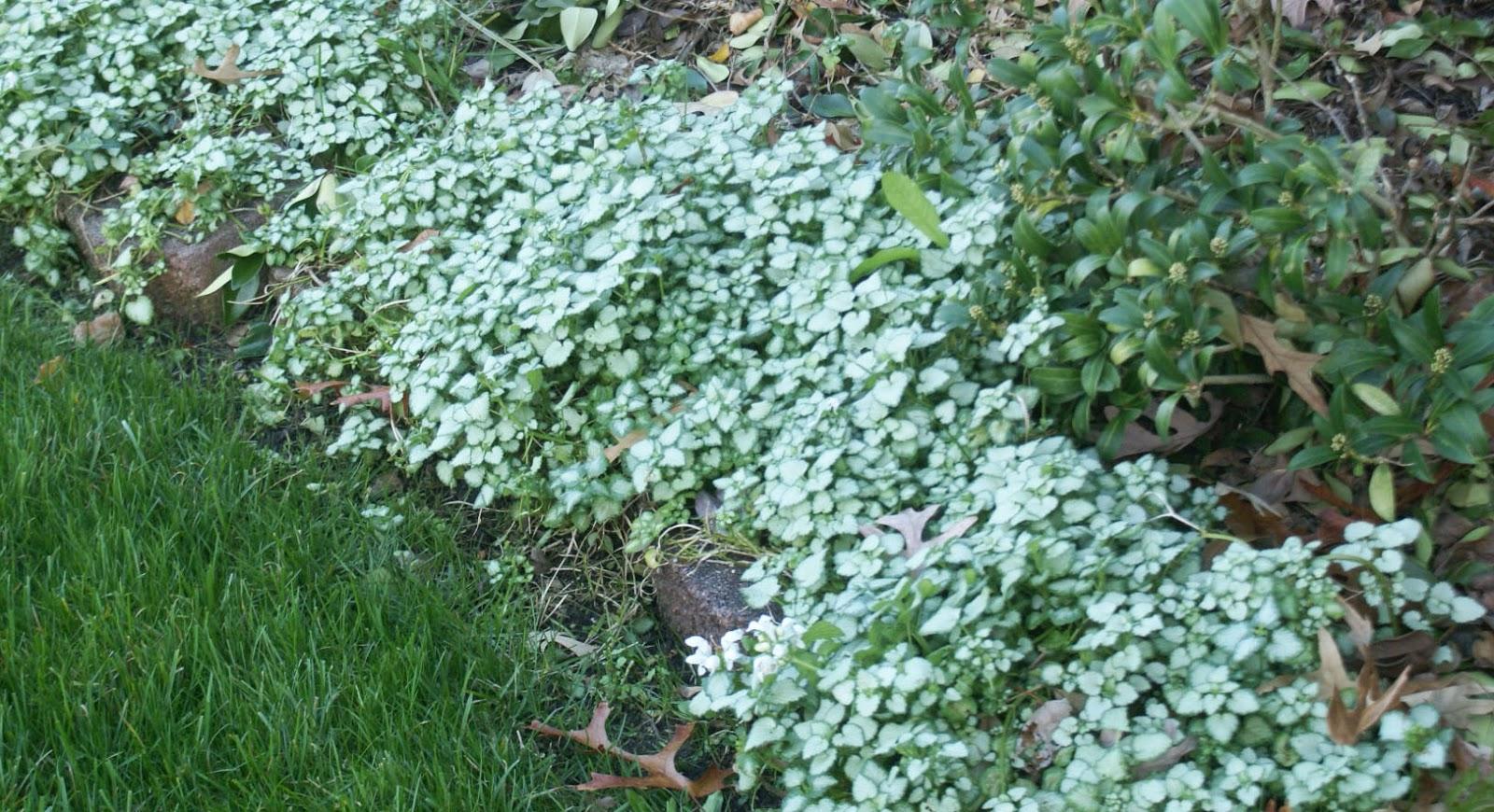 Garden Endeavors And Other Stuff November 2015