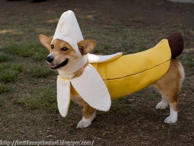 banana dog.