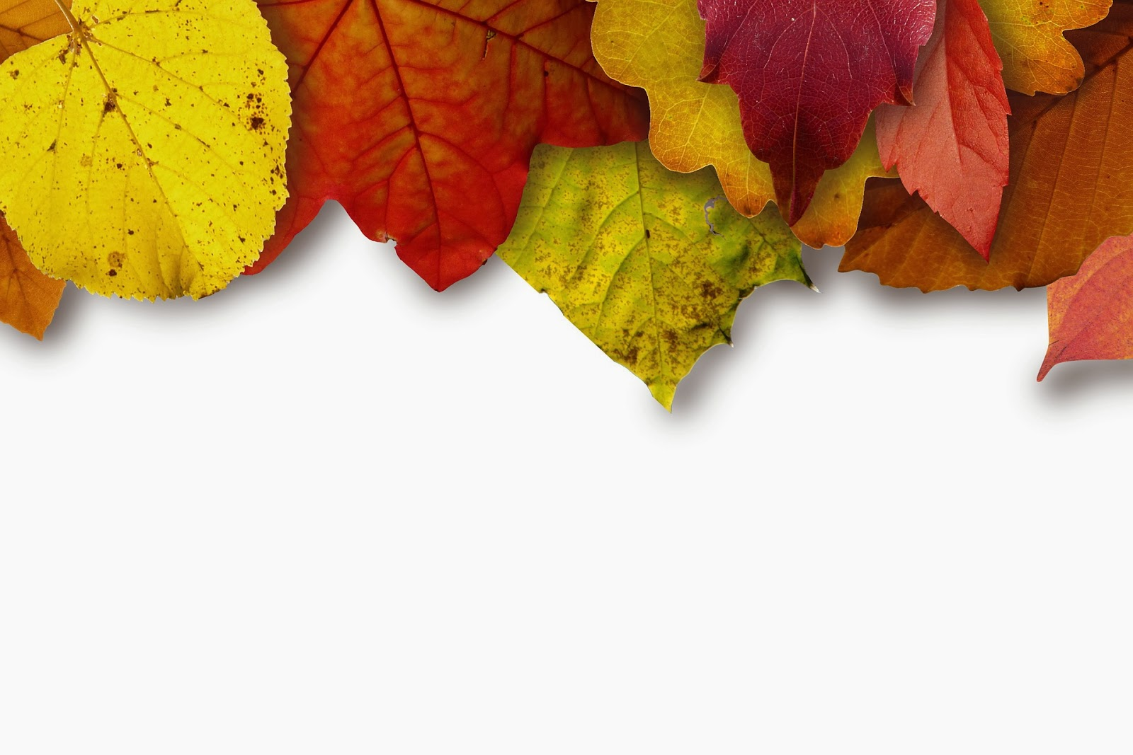 Heartbeat Magazine Finding Beautiful Free Fall Photos Online