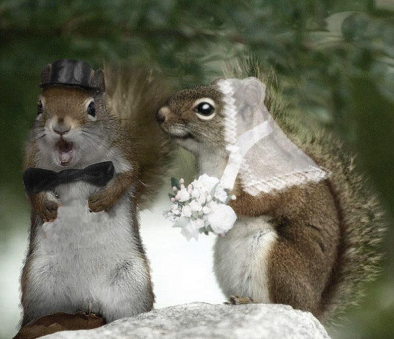 Squirrels With Glasses