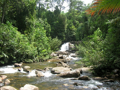 Sinharaja rain forest, waterfalls of sinharaja, Mederipitiya camping site, Forest departments, sri lankan beauty