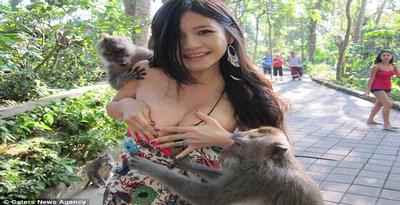 Foto Bikini Melorot Ditarik Monyet Ubud Bali