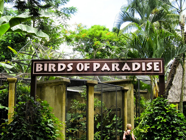 Bali Bird Park for things to do in Bali