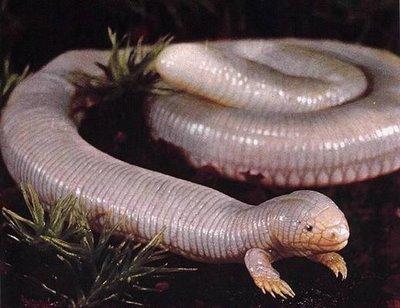 Makhluk Aneh Di Dunia Contoh Kumpulan Gambar Foto Model