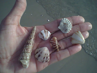 Entre caracolas marinas....