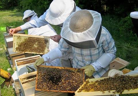 «Υποβολή αιτήσεων για τα προγράμματα ενίσχυσης των μελισσοκόμων»