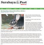 Surabaya Post, 23 Januari 2011