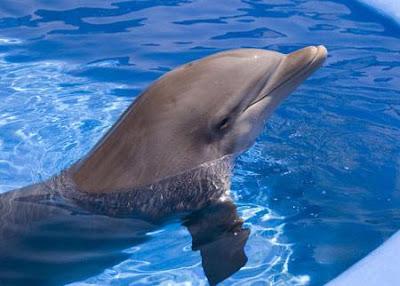 神奇海豚療法:與人類最好朋友共游 神奇「海豚療法」盛行