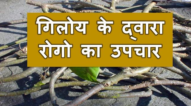 Giloy Amrita Aushdhiya or Aayurved ka Khajana