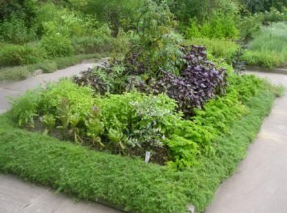 The green grub designing a herb garden - Tips planting herbs lovage parsley dill ...