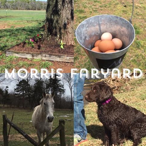 Morris Farmyard